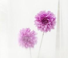 福津の花学校